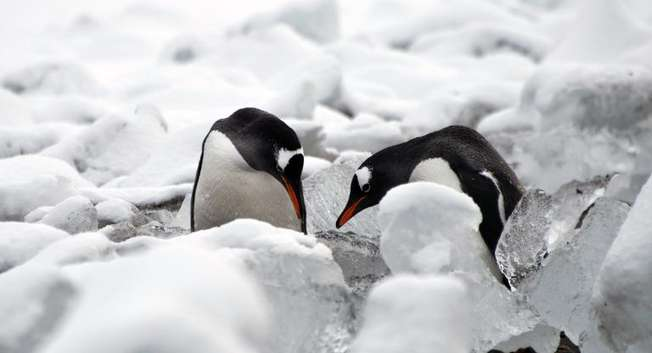 Penguins play at Chile's Presidente Eduardo Frei military base, on King George island, in Antarctica, on March 14, 2014 ( Vanderlei Almeida (AFP) )